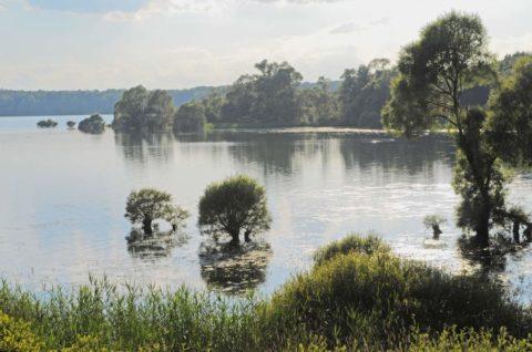 gite chez Jeannine à Fontaine (aube) - Lac de la forêt d'Orient